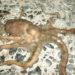 博多湾でテナガダコが良く釣れる時期と料理法とそのお味