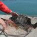 マル秘速報!糸島方面の乗っ込みチヌの爆釣ポイント